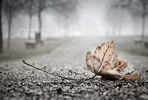 Autumn. Grey