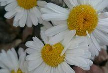 Мой сад / только мои личные фото моих личных цветов