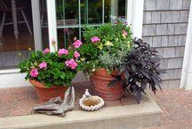 Porch/ Decks/Garden