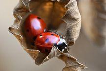 Macro Invertebrate Photos I Like