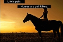 Horses and Horse Quotes / its all about horses, and horse quotes :)