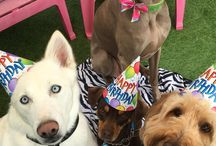 Doggy parties