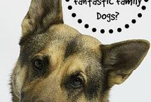 Dog infographic / The mst beautiful Dog infographic I have found on the Pinterest and Web.