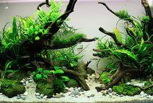 Aquario plantado