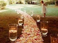 Wedding / by Meridith Cloyd