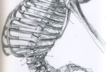 Disegni scheletro