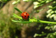 Gardening  / by Linda Prigge Wackenstedt