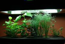 Superior growing / Why hydroponics is better than conventional gardening