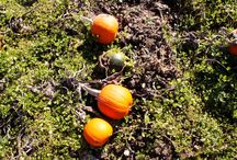 all the FALL things / all things autumn, fall, pumpkins, harvest, thanksgiving, halloween