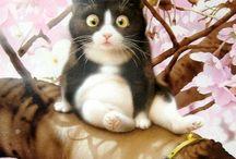 pictures cat