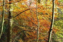 Autumn - of course!