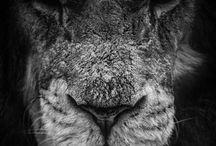 Lion &  Co.