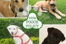 Pooch policy @LemonTreeHotels