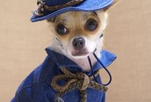 DOG FASHION / Because even our little beloved friend must be chic !!! Τhey deserve it!!!!