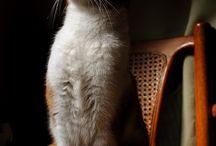 Cat,Chat,Gato