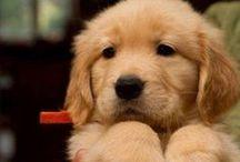 Puppiessss
