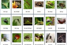 Ger. Insecten