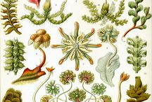 Botany / The Signature Of All Things. Botanical drawings, fun facts of plants, flowers and food.