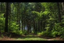 Природа в панораме