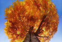 trees / by Kim Brow