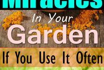 természetes növény védő és gyógyító