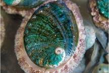 molluschi  crostacei e patelle