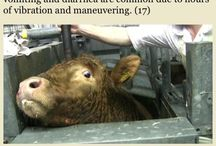 The truth about factory farms