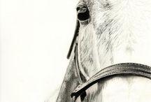 horses draws