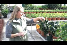 Caan's Garden Tutorials / Need some gardening tutorials?  Here are some videos by our talented workers! Check out our website or stop in today for help with all your gardening needs! www.caanfloral.com  -  (920) 452-4111