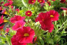Florystyka / Moje zdjęcia i inspiracje