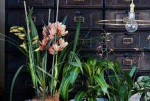 Indoor Flora