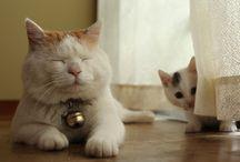 Cats +