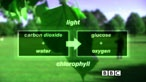GCSE Photosynthesis- theory