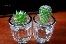 piante grasse in H2O