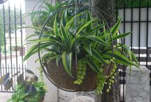 Green Container Plantings