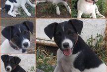 Örökbefogadható kutyák - Hajdúszoboszló