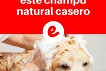 cuidados para el perro