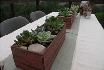 Apples & Succulents/Sustainability Event / Inspirations for sustainability event in the big apple!