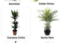 Plants & sh!t