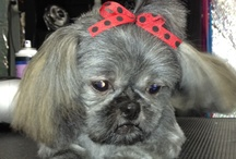 Shaggy Tails Pet Salon / Shaggy Tails Pet Salon  Grooming and boarding