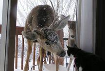 reinsdyr og katter