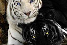 Animali / Animali vari