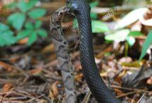 snakes / by Susan Braun