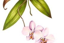 Botanical artists