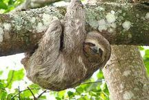Animals-Sloths / by Clickit Bryant