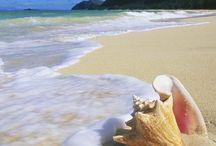 Shores   Seas   Beaches