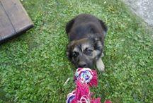 Můj psí miláček / Menší album fotek mého německého ovčáka