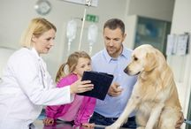 Our Services / Here are some of the many services offered at Barton Heights Veterinary Hospital in Stroudsburg, PA