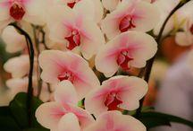 Flowers / by Tera Meeks
