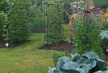♣Secret Vegetable Garden